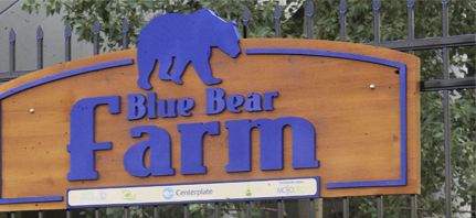 blue_bear_thumbnail